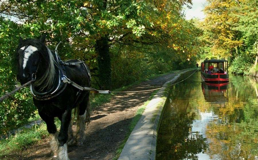 Llangollen canal boat horse drawn carriage
